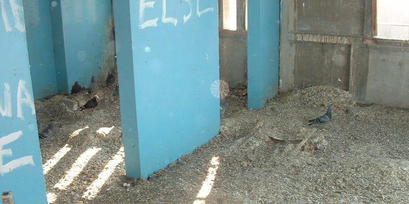 Bird Fouling Removal Glasgow - Pest Solutions - Pest Bird Control