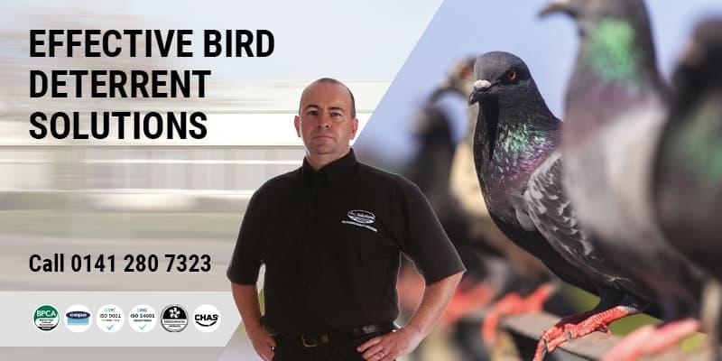 Bird Netting Glasgow - Pest Solutions