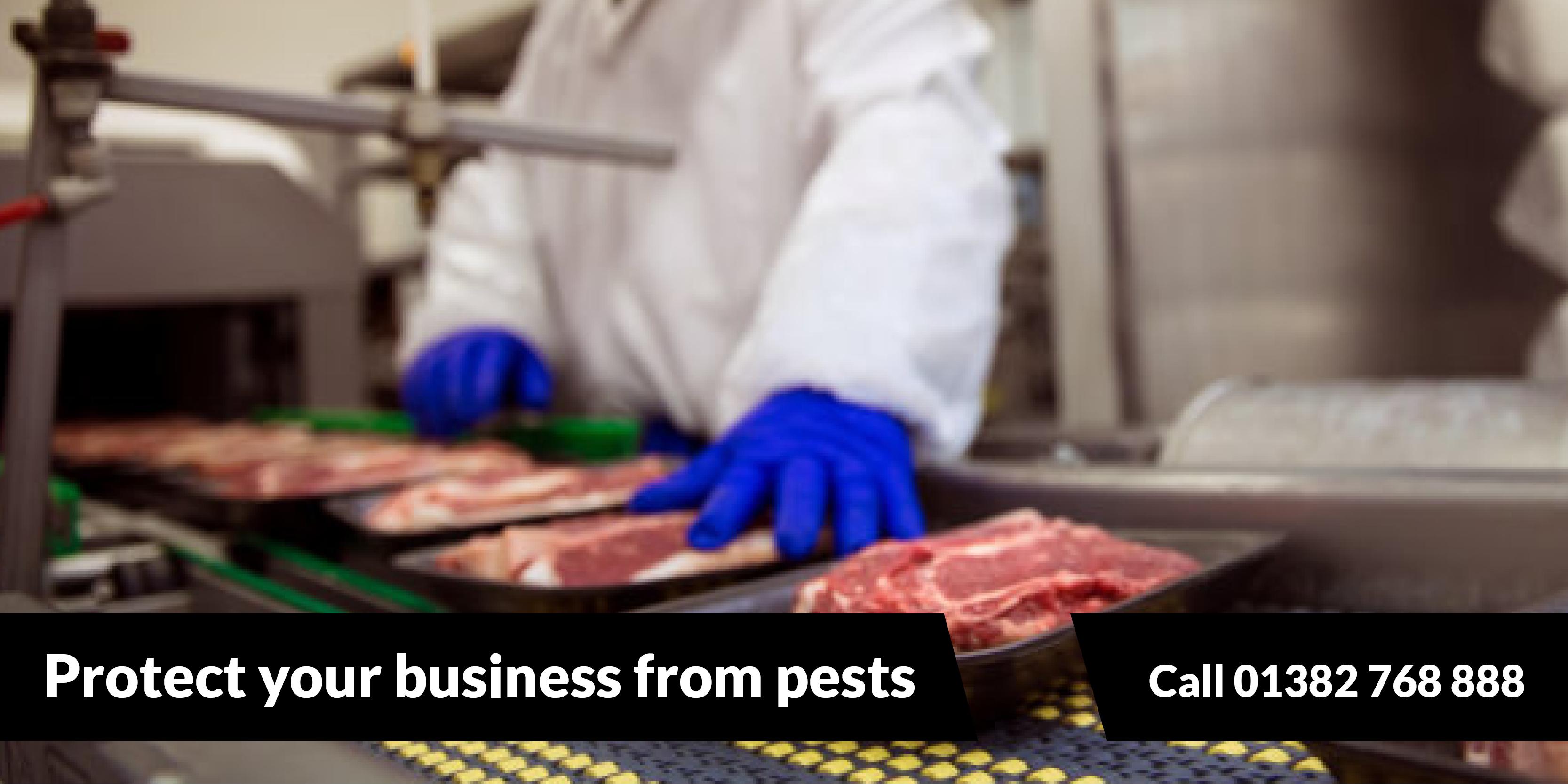 Bird Control Dundee