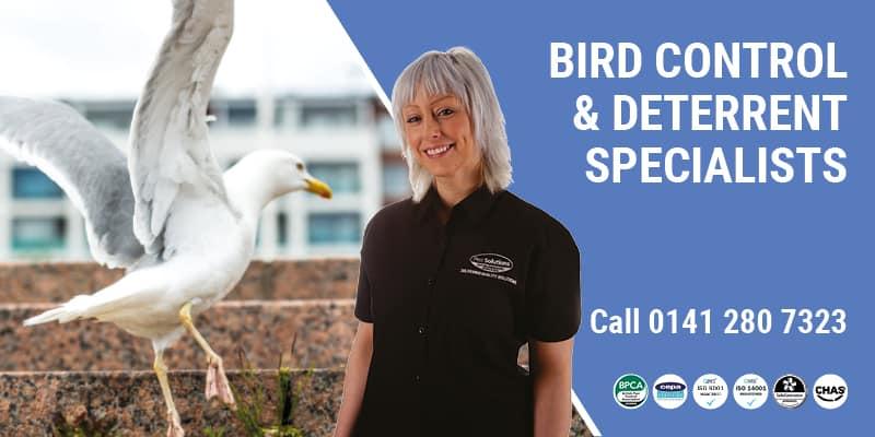 Gull Control Glasgow - Pest Solutions