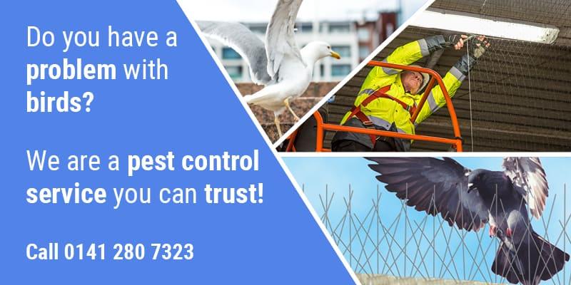 Pest Bird Control Glasgow - Pest Solutions