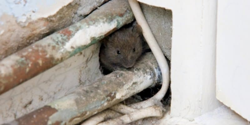 Pest Proofing Glasgow - Pest Solutions - Pest Prevention